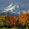 1m5117-mt. Hood In Autumn by Ed  Cooper Photography