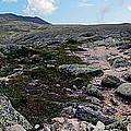 Mt Katahdin Appalachian Trail by Glenn Gordon