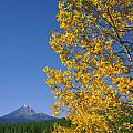 1m5720-mt. Mcloughlin In Fall, Or by Ed  Cooper Photography