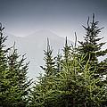 Mt. Mitchell In Fog by Mela Luna