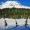Mt Rainier And Three Trees by Inge Johnsson