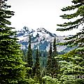 Mt. Rainier Framed by DAC Photography