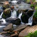 Mt Rainier Mountain Stream by Randall Branham