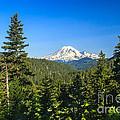 Mt Rainier by Robert Bales