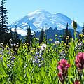 Mt. Rainier Wildflowers by Jim And Emily Bush