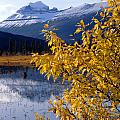 1m3626-mt. Saskatchewan In Fall by Ed  Cooper Photography