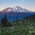 Mt. Shasta At Dawn by Stuart Gordon