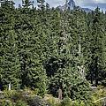 Mt Washington Behind Clear Lake by Belinda Greb