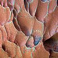 Muav Mosaic by Britt Runyon