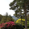 Muckross Garden In Spring by Christiane Schulze Art And Photography