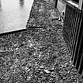 mud banks of the river thames and reinforced pilings at southwark London England UK by Joe Fox
