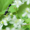 Mud Dauber In The Flowers by Optical Playground By MP Ray