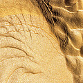 Mud Flare by Deborah Hughes