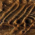 Mud Flats Five by Gary Warnimont