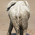Muddy Elephant With Funny Stance  by Johan Swanepoel