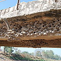 Muddy Nests by Vivek Kumar