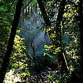 Muir Woods by Aidan Moran