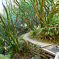 Curve In The Dipsea by Lexi Heft
