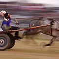Mule Cart Race by Ajit Pal Singh