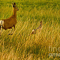 Mule Deer Doe And Fawn-signed-#0365 by J L Woody Wooden