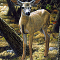 Mule Deer Fawn - Monarch Moment by Crista Forest