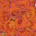 Multi Rose Electric Orange by Joseph Hedaya