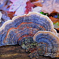 Multicolor Mushroom by Joshua Bales