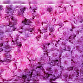 Mums In Purple - Featured In 'comfortable Art' And 'nature Photography' Groups by Ericamaxine Price