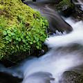 Munson Creek Flows Through The Forest by Robert L. Potts
