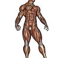Muscular Man Standing by Elena Duvernay