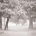 Museum Park Fog by Trish Tritz