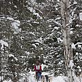 Musher In The Forest by Tim Grams