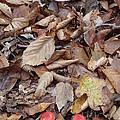 Mushroom And Leaves by Robert Nickologianis