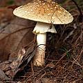 Mushroom by Kenny Glotfelty