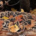 Mushroom Log by Ron Chilston