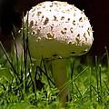 Mushroom by Lonnie Paulson