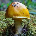 Mushroom by Melissa Estep