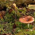 Mushroom N Moss by James Peterson