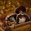 Mushrooms In A Basket by Matthew Pace