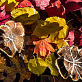Mushrooms In Fall Leaves by Kathleen Bishop