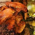 Mushrooms Untitled 2754 by Damon Clarke