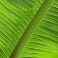 Music by Windy Osborn