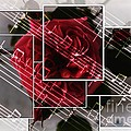 Musical Rose Montage by Barbara Griffin