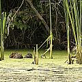 Muskrat Family by Edward Peterson