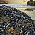 Mussel Beach by Sharon Foster
