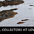 Mussel Collectors At Low Tide - Shellfish - Low Tide by Barbara Griffin
