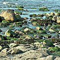 Mussels And Moss by Lisa Blake