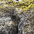 Mussels Barnacles Seaweed Closeup by Lee Serenethos