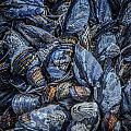 Mussels In Blue 3 by Roxy Hurtubise