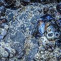 Mussels In Blue 7 by Roxy Hurtubise